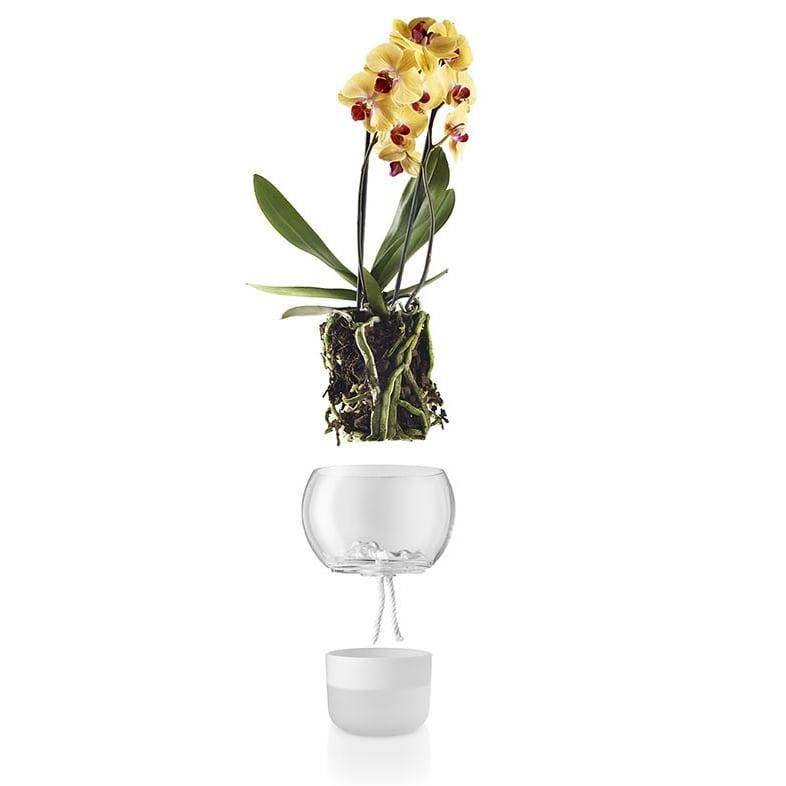 tegla za orhideje